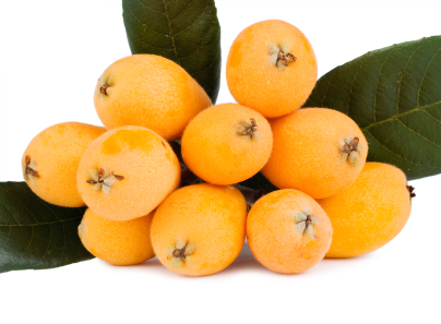 Buy Loquat Tree Japanese Plum For Sale In Orlando Kissimmee