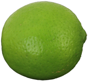 persian_lime_outside