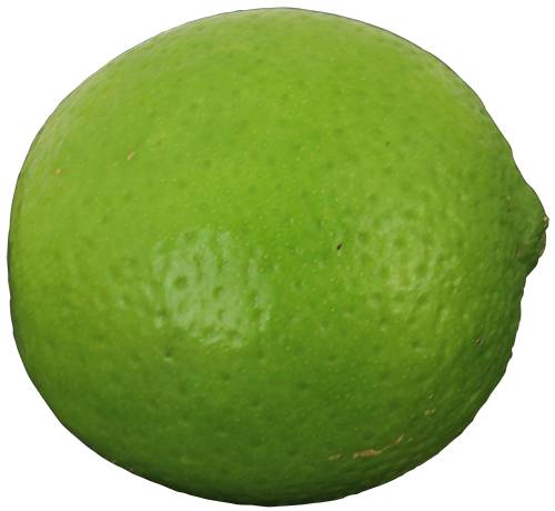 Buy Persian Lime Trees, For sale in Orlando, Kissimmee