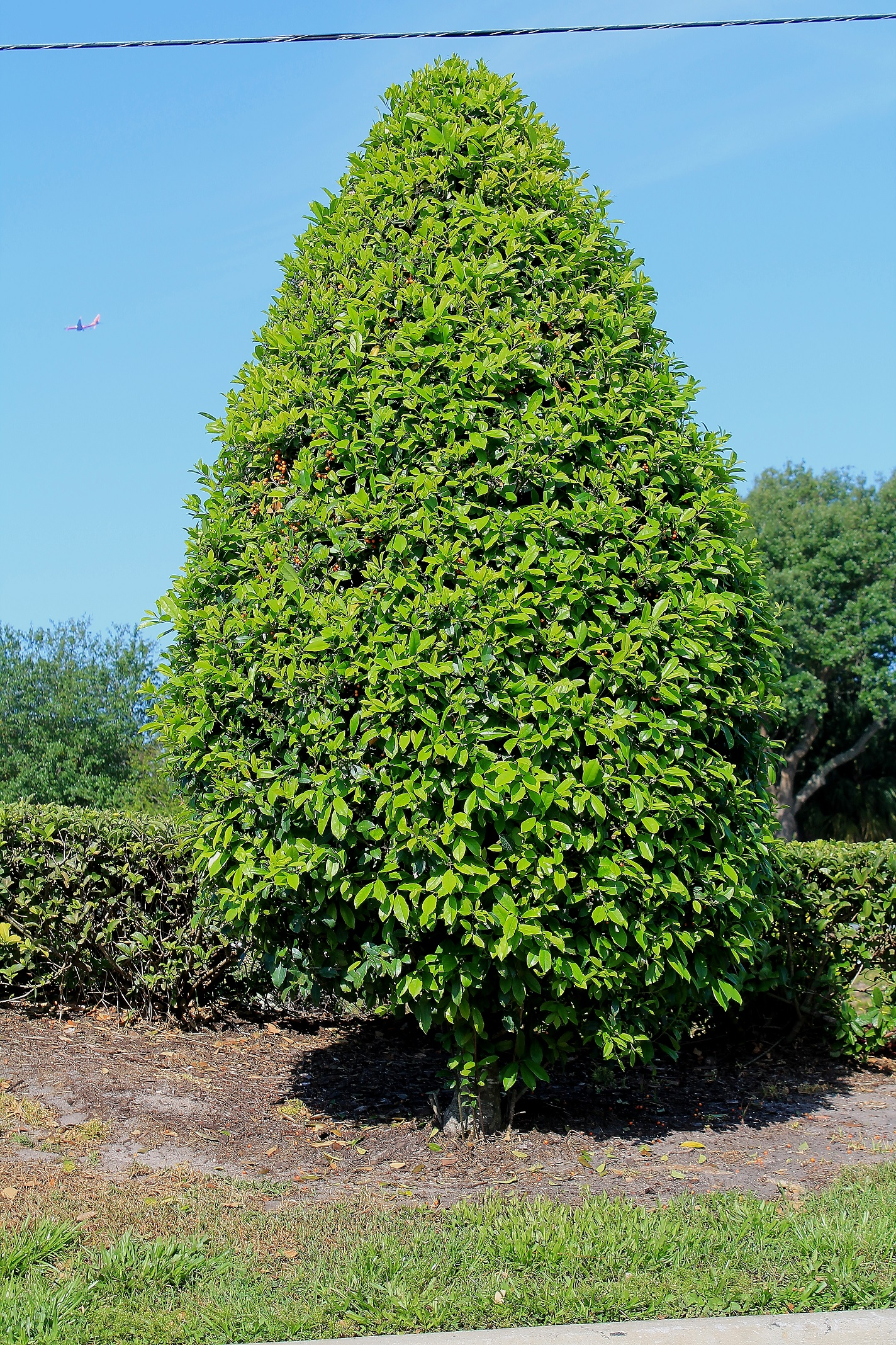 Buy East Palatka Holly For Sale In Orlando Kissimmee